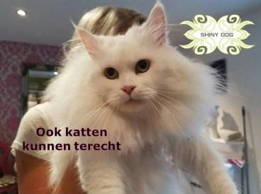ook-katten-kunnen-terecht