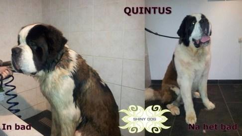quintus-voor-en-na